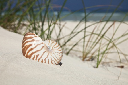 nautilus shell on beach  grass and tropical sea photo