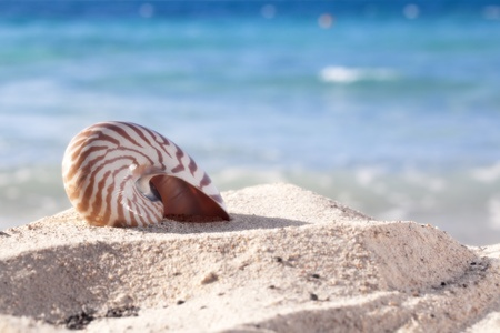 nautilus shell on a beach sand, against blue sea, shallow dof photo