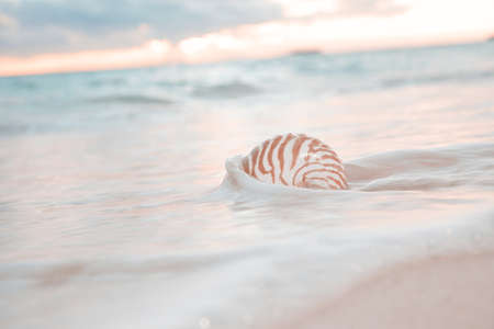 nite: nautilus shell in the sea wave and sunrise