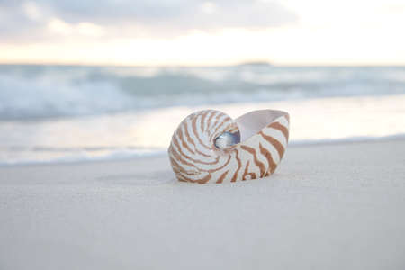 nite: nautilus shell at the sea wave and sunrise