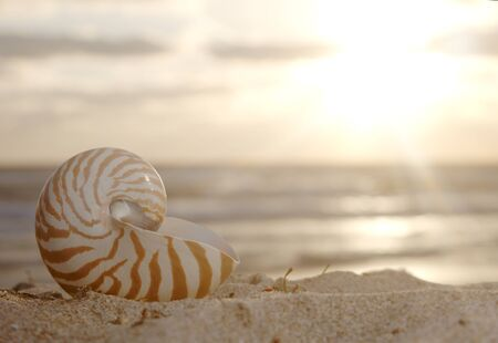 nautilus shell on beach , golden sunrise over  tropical sea, shallow dof photo