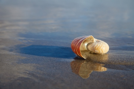 nautilus: nautilus shell on beach  and blue  sea, shallow dof Stock Photo