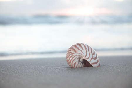 nautilus shell on beach, sunrise and  tropical sea, shallow dof photo