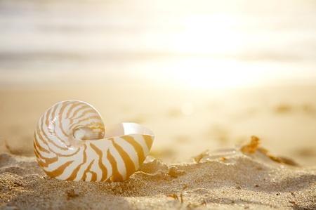 nautilus shell on beach  under golden tropical sun beams, shallow dof Stock Photo - 12020420