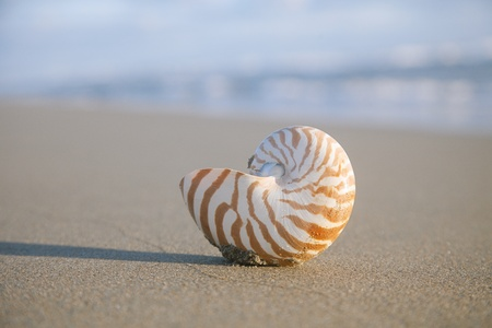 nautilus shell on beach  and blue  sea, shallow dof photo