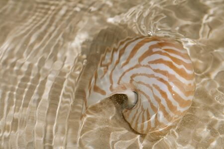 nautilus shell in the sea wave photo