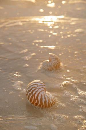 nite: golden sunrise and nautilus shells in the sea