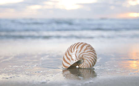 nautilus shell on beach, sunrise and  tropical sea, shallow dof Stock Photo - 12783674