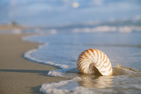 nautilus shell on beach  and blue  sea, shallow dof photo