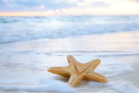 starfish beach: sea star starfish on beach, blue sea and sunrise time, shallow dof Stock Photo