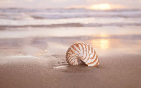 nautilus shell on beach , golden sunrise over  tropical sea, shallow dof Stock Photo - 13564957