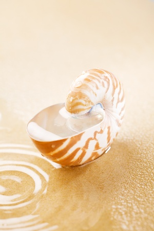 seawater: Nautilus shell full of water in sea sand. Concept of seawater Pollution in the world.