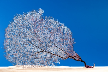 Dried coral reef sea fan on sand. Concept of seawater Pollution in the world.  This pictures belongs to the Sea Things series in my portfolio photo