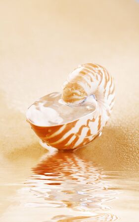 Nautilus shell full of water in sea sand photo