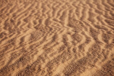 abstract sand background with sunlight and grass in desert photo