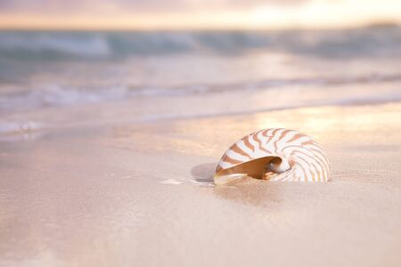 nautilus shell: golden sunrise and nautilus shell in the sea