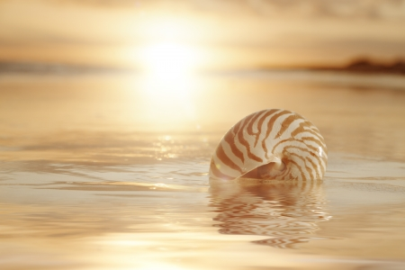 golden sunrise and nautilus shell in the sea photo