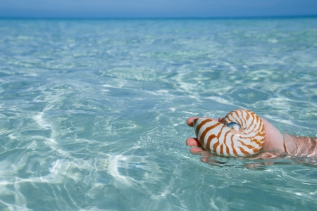 nautilus pompilius: man hand holding nautilus shell in clear blue water sea,, shallow dof Stock Photo