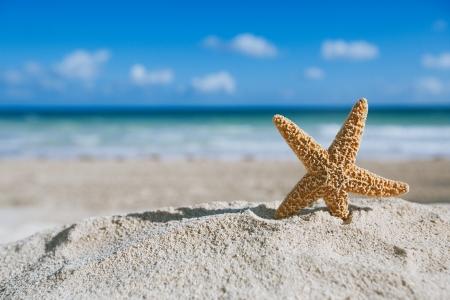 étoile de mer: étoiles de mer avec l'océan, la plage et marins, shallow dof