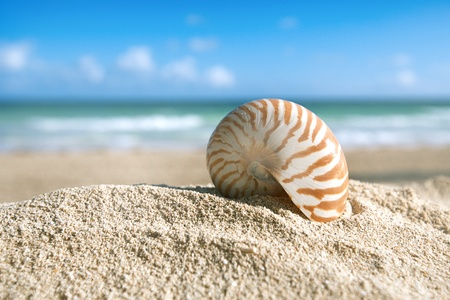 small nautilus shell  with ocean , beach and seascape, shallow dof Stock Photo - 17691082