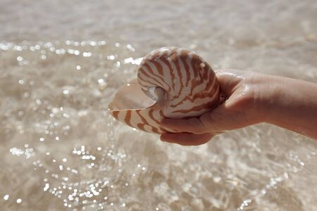 nautilus shell  in a girl hand,, shallow dof photo