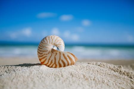 small nautilus shell  with ocean , beach and seascape, shallow dof Standard-Bild