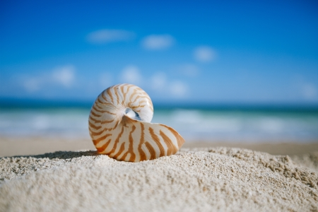 small nautilus shell  with ocean , beach and seascape, shallow dof Banco de Imagens