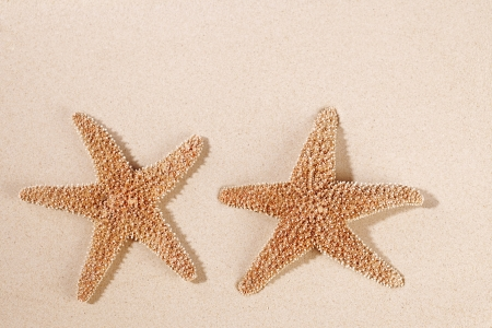two sea star starfish on sand backdrop photo
