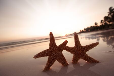 sea star starfish Silhouette on sunrise beach,  shallow dof photo