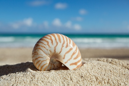 all seasons: small nautilus shell  with ocean , beach and seascape, shallow dof Stock Photo