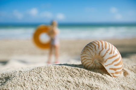 small nautilus shell  on beach against blue sea , shallow dof photo