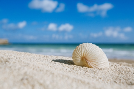 thin shell: paper nautilus shell  with ocean , beach and seascape, shallow dof