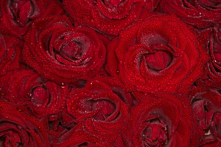 Red natural roses background  with droplets photo