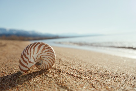 nautilus shell on the issyk-kul beach sand with mountains on background photo