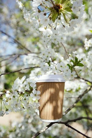 coffee in paper cup in Spring with blossom cherry flower sakura photo