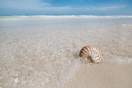nautilus shell  in blue sea wave, shallow dof photo