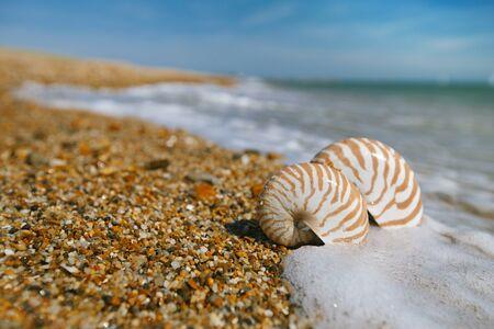 water s edge: shell Nautilus su peblle spiaggia e le onde del mare vicino a Bournemouth, Regno Unito shallow DOF