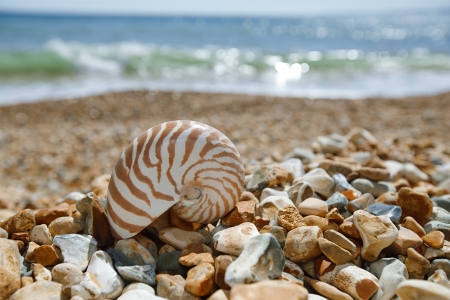 hengistbury: nautilus shell on peblle  beach and sea waves near Bournemouth, UK. shallow dof