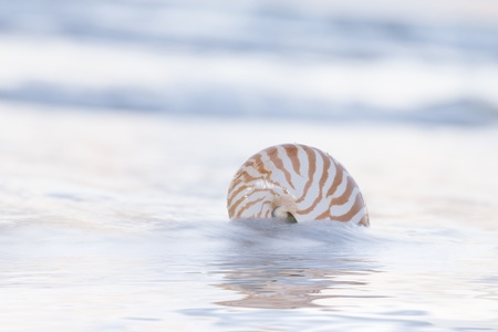 nautilus shell on beach, pale sunrise light and  tropical sea photo