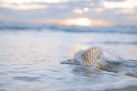 nautilus shell in sea wave and sunrise , shallow dof photo