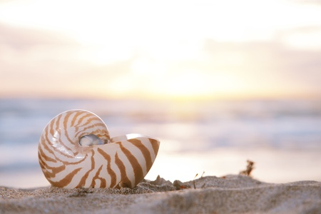 nautilus shell on beach, sunrise and  tropical sea, shallow dof photo