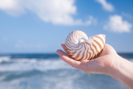nautilus shell: man hand holding nautilus shell against sea waves,, shallow dof