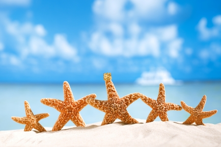 starfish  with ocean , beach and seascape, shallow dof Banco de Imagens