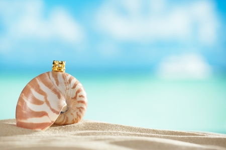 dof: nautilus shell and crown  with ocean , beach and seascape, shallow dof