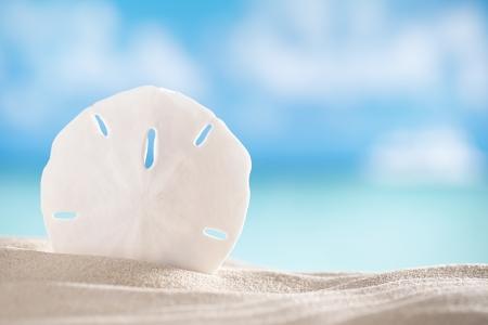 sand dollar: c�scara del d�lar de arena en la playa y el mar y el fondo del barco, dof bajo