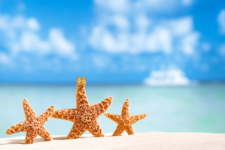 starfish  with ocean , beach and seascape, shallow dof photo