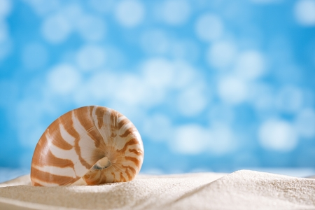 small nautilus shell  with ocean , beach and seascape, shallow dof photo