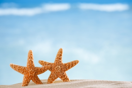 starfish beach: starfish  with ocean , beach and seascape, shallow dof Stock Photo