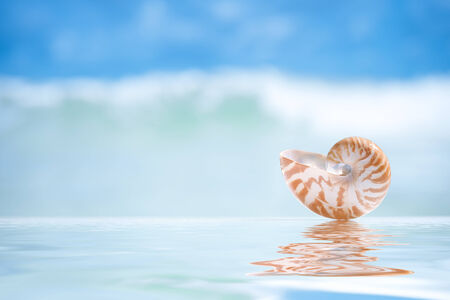 small nautilus shell  and reflection with ocean, wave and seascape, shallow dof photo