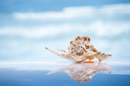 caribbean climate: seashell  and reflection with ocean, wave and seascape, shallow dof Stock Photo